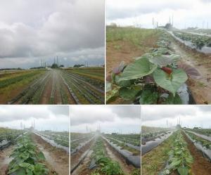 岡田家の農作物